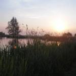 Koudenhoorn